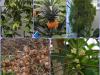 prekmurje-tropski-vrt